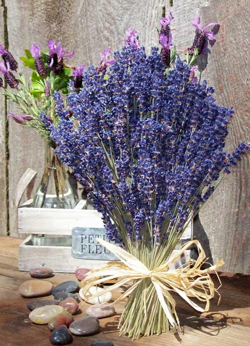 buchet flori lavanda